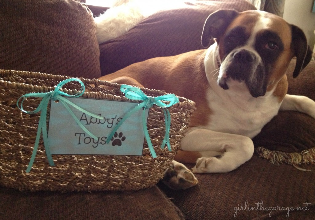 Abby and her dog toy basket.  Girl in the Garage